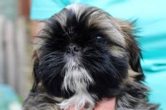14.puppy_