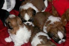 21.puppy_