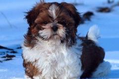 4.puppy_