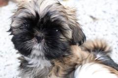 7.puppy_