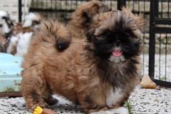 9.puppy_